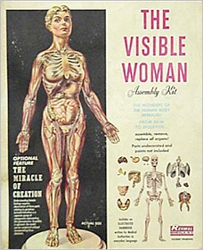 Visible Woman toy